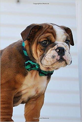Super Cute Baby Bulldog Puppy Lined Journal