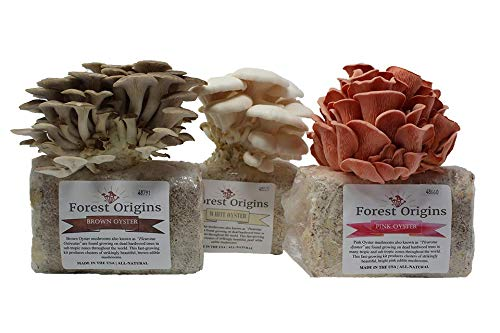 Specialty Trio Mushroom Growing Kit Bundle - All in One Indoor Mushroom Grow Kit - Exotic Mushroom- Top Gardening Gift, Holiday Gift, Unique Gift ()