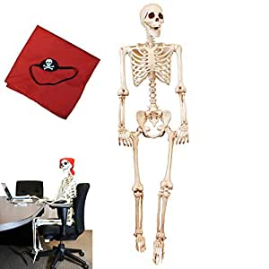 5 ft Pose-N-Stay Life Size Skeleton Full Body Realistic Human Bones with Posable Joints for Halloween Pose Skeleton Prop Decoration