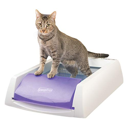 PetSafe ScoopFree Original Self-Cleaning Cat Litter Box - Automatic with Disposable Tray and Non-Clumping Crystal Litter - Purple