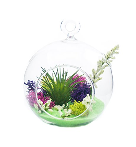 "Air Plant Terrarium Kit | Imagination Land | Natural Accents Series | Tricolor Moss | Complete Tillandsia Gift Set | 4"" Glass Globe 