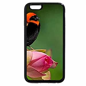 iPhone 6S Plus Case, iPhone 6 Plus Case, Morning song of bird for Afsar