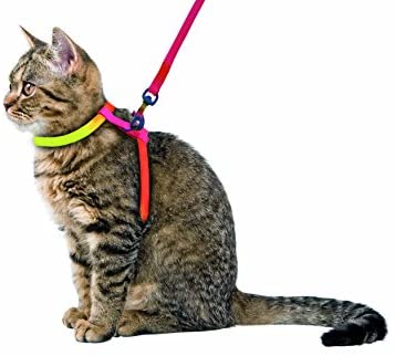 Arnés para gatos RAINBOW 10 mm/120 cm: Amazon.es: Productos para ...