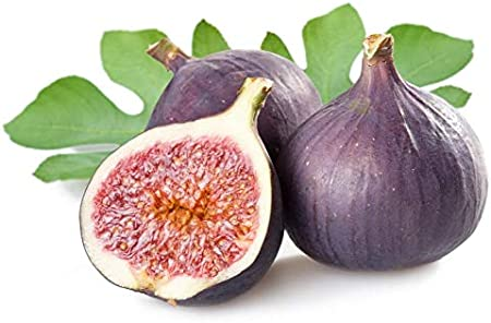 Ultrey Seed House Exotic Mini fig Tree Seeds Fruit fig fig Brown Turkey Dwarf fig Tree Bonsai Seed Hardy Perennial