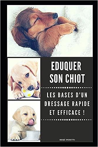 Gamelle Chihuahua - 15 techniques à savoir - Éducateur canin - Gratuit