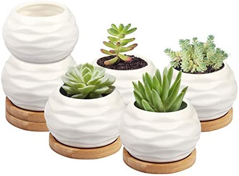Resin Cactus Succulent Plant Pot Flower Planter Mini Garden Ball Design Pack