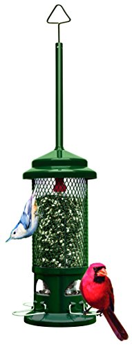"41gxexRyvIL - Squirrel Buster Standard 5""x5""x21.5"" (w/hanger) Wild Bird Feeder with 4 Metal Perches, 1.3lb Seed Capacity"