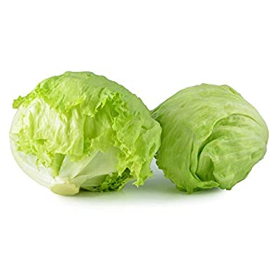 500 Iceberg Lettuce Seeds Lactuca Sativa by RDR Seeds : Garden & Outdoor