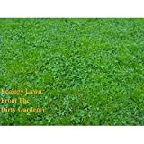 The Dirty Gardener Ecology Lawn Seed - 50 Pounds