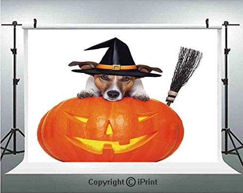 Halloween Photography Backdrops Witch Dog with a Broomstick