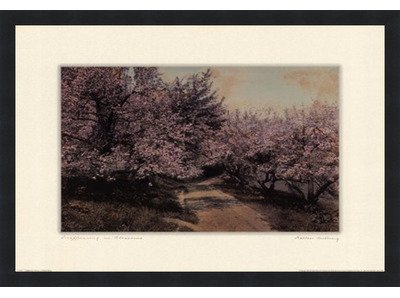 Poster Palooza Framed Disappearing Blossom- 24x18 Inches - Art Print (Classic Black Frame)