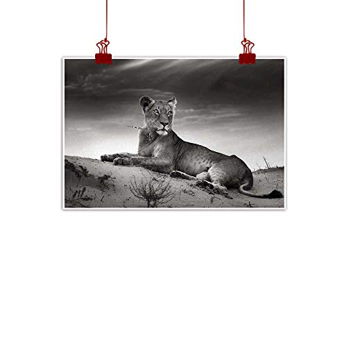 """Sunset glow Wall Art Painting Print Black and White,Wild Lioness on Desert Sand Dunes African Animal Safari Image Print,Black White Grey 32""""x24"""" for Bedroom Office Homes Decorations"""