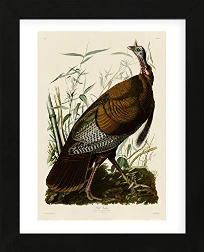 McGaw Graphics Wild Turkey I by John James Audubon Framed Print Quick Ship 16x13x1 ()