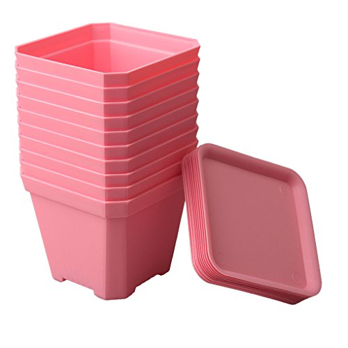 BangQiao 10 Pack 3.90 Inch Square Plastic Flower and Succulent Pots, Seeding Starter Transplanting Plant Container, Pink ()
