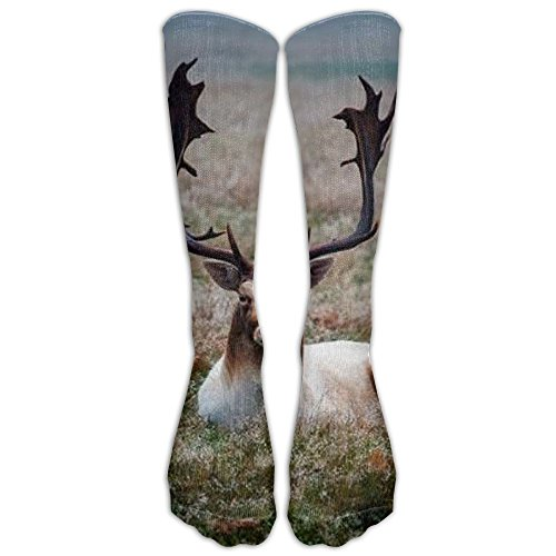 Price comparison product image Fun Fallow Deer Stag Unisex Crew Fashion Novelty Sock