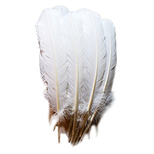 (Everyshine 120 Pcs Turkey Quill Feathers 10-12 inches White)