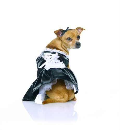 Secret Wishes, French Maid Pet Costume, Size Small