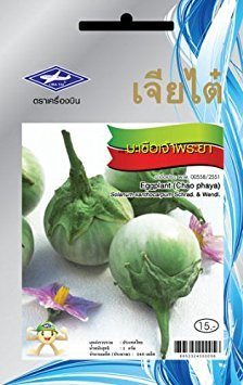 Chao Phaya Eggplant (240 Seeds) Seeds - 1 Package From Chai Tai, Thailand
