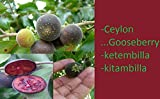 HIGH Germination Seeds:Goose Seed, ketembilla, kitambilla, Dovyalis hebecarpa Seed