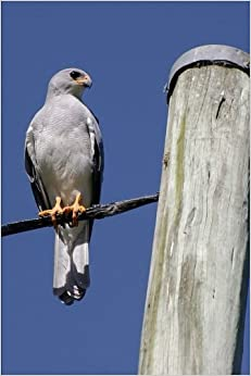 Book Goshawk Bird of Prey Journal: 150 Page Lined Notebook/Diary