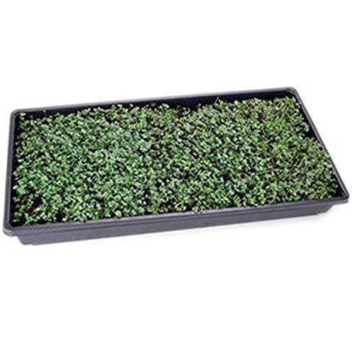 Basic Salad Mix Micro Greens Seeds: 25 Lb - Bulk Non-GMO Seed Blend: Broccoli, Kale, Kohlrabi, Cabbage, Arugula, More by Mountain Valley Seed Company (Image #3)
