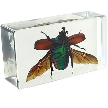 Green Rose Chafer Beetle Rectangular Paperweight (2 8