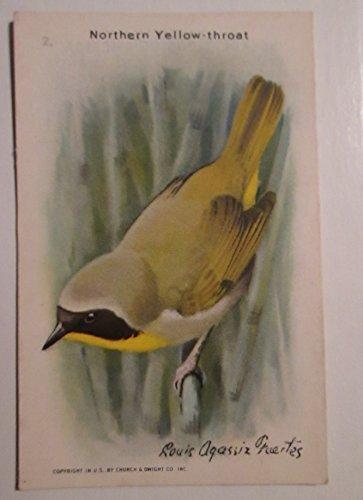 (Useful Birds of America #2 Northern Yellow-throat - 9th Series 1938 (Church & Dwight Co. - Arm &)
