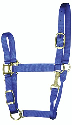 - Hamilton 1-Inch Nylon Adjustable Quality Halter with Chin Snap for 500 to 800-Pound Horse, Small, Blue