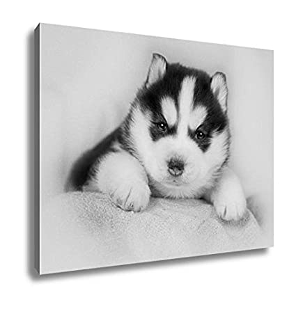 Amazon Com Ashley Canvas Cute Siberian Husky Puppy Home Office