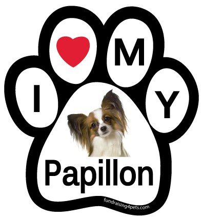 - I Love My Papillon Paw Magnet