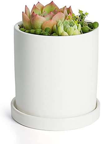 Greenaholics Plant Pots – 4.3 Inch Ceramic Matte Surface Cylinder Ceramic Planters for Succulents, Cactus, Flower Planting, with Drainage Hole and Tray, Matte White