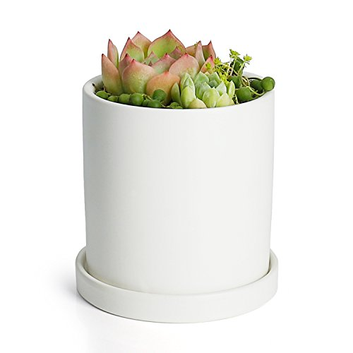Greenaholics Plant Pots - 4.3 inch Ceramic Matte Surface Cylinder Ceramic Planters for Succulents, Cactus, Flower Planting, with Drainage Hole and Tray, Matte White by Greenaholics