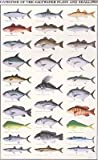'Gamefish of the Saltwater Flats and Shallows' poster