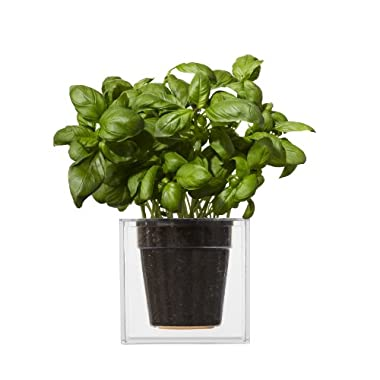 Boskke Clear Cube Tabletop Planter - Large