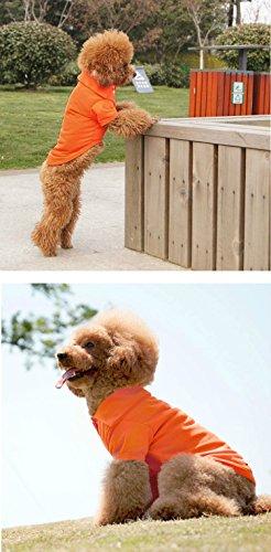 [GohEunGyung shop【Orange M】Pet Puppy Summer Shirt Small Dog Cat Pet Clothes Costume Apparel] (Mean Girls Bunny Halloween Costume)