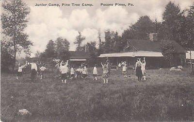 D4909 PA, Pocono Pines Pine Tree Camp Postcard