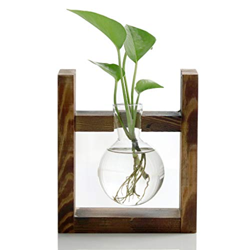 Ivolador Desktop Glass Planter Bulb Vase with Retro Solid Wooden Stand for Hydroponics Plants Home Garden Wedding Decor (1 Bulb Vase)