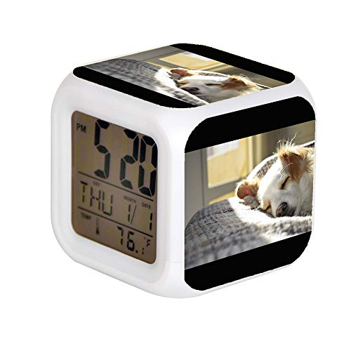 JHSIT 7 Color Change LED Digital Alarm Clock with Date Alarm Thermometer Desktop Table Cube Alarm Clock Child Home Close-up Photography of Blenheim Cavalier King Charles Spaniel