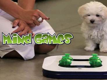 Dogit Mind Games 3-in-1 Interactive Smart Toy for Dogs 7