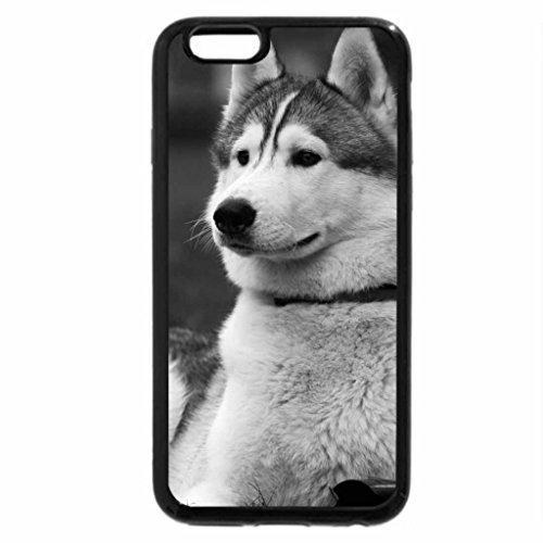 iPhone 6S Plus Case, iPhone 6 Plus Case (Black & White) - ALERT LOOKING HUSKY