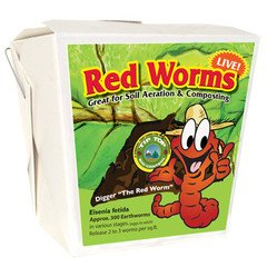 300 Red Wigglers - Red Worms are Great for Organic Gardening and Composting ()