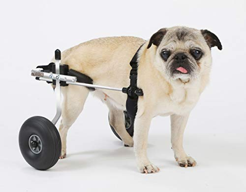 K9 Carts | The Original Dog Wheelchair | Veterinarian Established | Custom Built in The USA (Extra Small 6-15 lbs, Polished Aircraft Grade Aluminum)