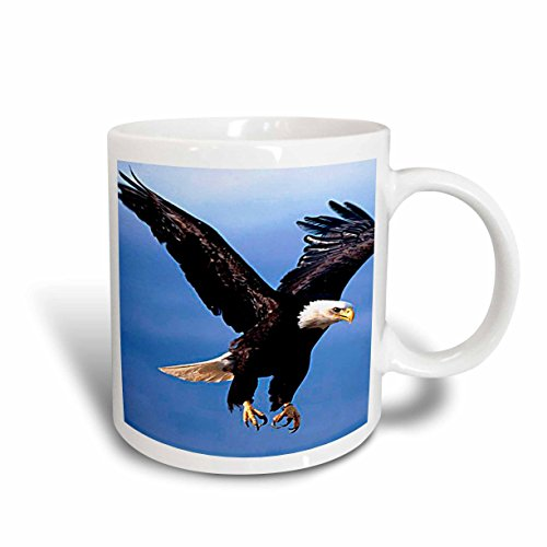 3dRose Bald Eagle Mug, 11-Ounce