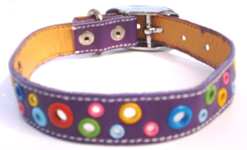 Loki Leather Puppy (The Cool Puppy Loki Puppy Leather Dog Collar - Punk Purple Large (12-14 inches))