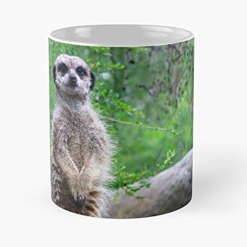 Meerkat Standing Cute Animal - 11 Oz Coffee Mugs Unique Ceramic Novelty Cup, The Best Gift For -