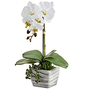 "16"" Silk Phalaenopsis Orchid & Succulent Flower Arrangement w/Cement Pot -White (Pack of 2) 109"