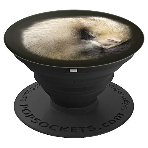 (Ferret Sleeping Pop Socket Phone Holder - PopSockets Grip and Stand for Phones and Tablets)