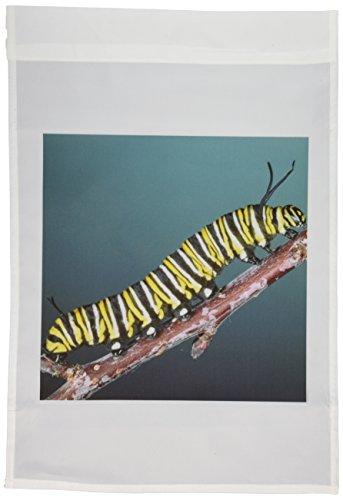 3dRose fl_83852_1 NA02 DNO0209 Monarch Butterfly Caterpillar, California, USA David Northcott Garden Flag, 12 by -