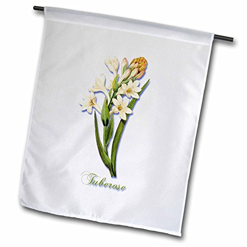 3dRose BLN Flowers and Fruits by Pierre Joseph Redoute - Tuberose Pretty Spring Flowering Plant Botanical Print - 12 x 18 inch Garden Flag (fl_181172_1) (Square Tuberose)