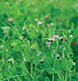 The Dirty Gardener Maxum D2340 Field Peas Cover Crop Seeds, 5 Pounds